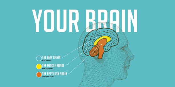 three-brains-static